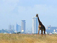 Nairobi national park with the city in the background