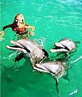 swimming with dolphins in wasini island